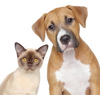 Thumb 1470662607 1470662603 cat dog fotojagodka istock 000018774451large